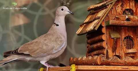 produse pentru porumbei de la produsecolumbofile.ro